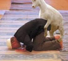 Kambing Nyodok  Muslim Sholat